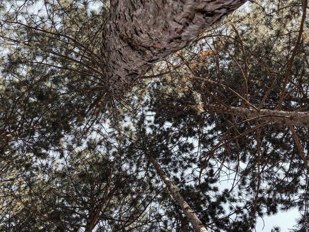 Baum, Neue Perspektive