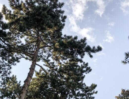 Niederschwellige Naturverbindung - der Baum