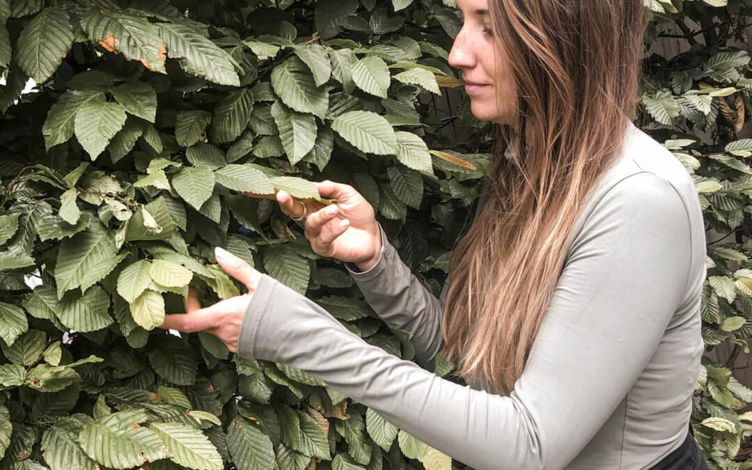 Pflanzen kennen lernen